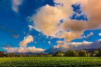 Buitenverwachting Wine Farm, Constantia, Cape Winelnads, near Cape Town, South Africa.