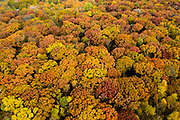 Fall Colors at LeRoy Oaks Forest Preserve in St. Charles Illinois