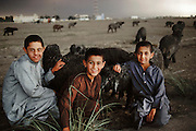 Young boys with white sheep turned black from oil, smoke and rain from oil well fires near Umm al-Haiman, south of Ahmadi, Kuwait in March of 1991. More than 700 wells were set ablaze by retreating Iraqi troops creating the largest man-made environmental disaster in history.