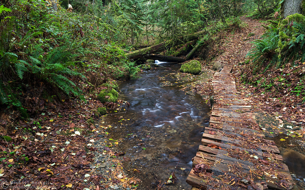 Fall leaves cover a trail over Dianne Brook on the side of Sumas Mountain in Abbotsford, British Columbia, Canada