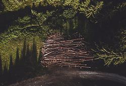THEMENBILD - Stapel gefällter Bäume bereit zum Abtransport neben einem Forstweg, aufgenommen am 26. Juli 2019 in Piesendorf, Österreich // pile of wood in the green forest ready for transport next to a forest road, Piesendorf, Austria on 2019/07/26. EXPA Pictures © 2019, PhotoCredit: EXPA/ JFK