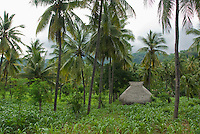 Traditional thatched-roof bamboo hut in a corn field on Atauro Island, Timor-Leste (East Timor)