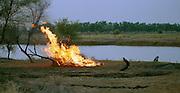 Fire landscape - Podor Senegal