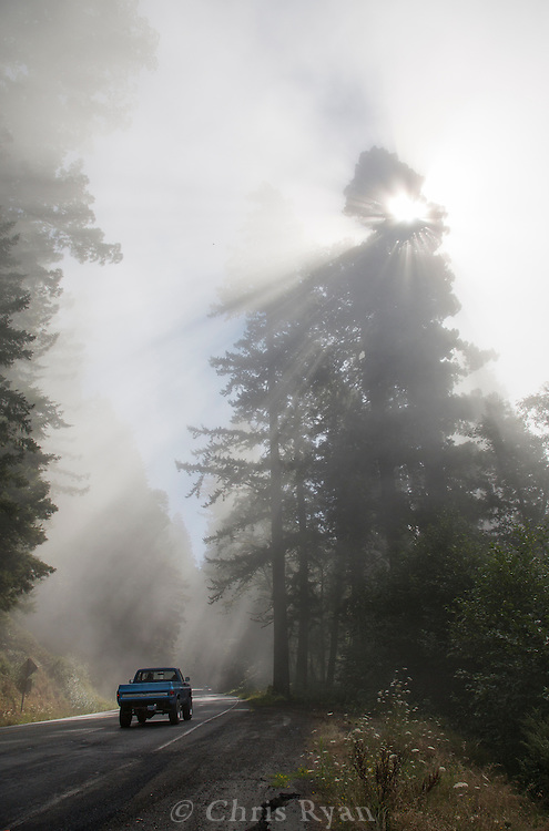 Mist in the mountaintop trees south of Crescent City, California