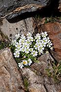 La vegetazione che nasce negli interstizi delle pietre.