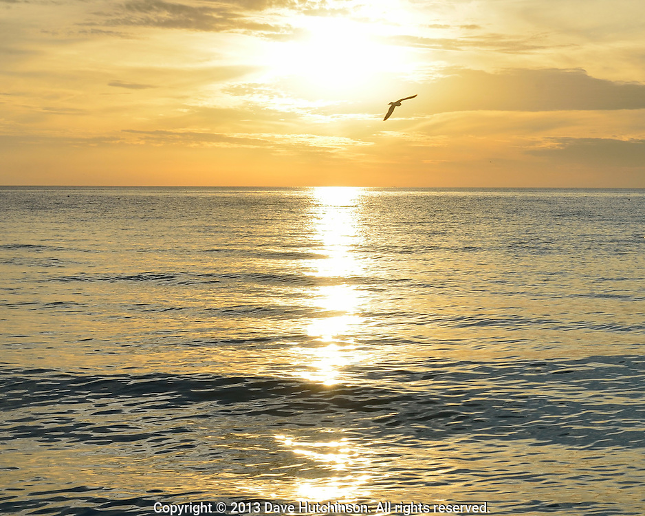 Seagulls flying in a golden November sunset at Lido Beach, Sarasota, Florida.