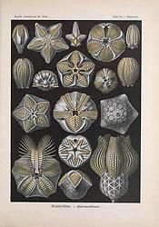 Kunstformen der Natur<br /> Leipzig und Wien :Verlag des Bibliographischen Instituts,1899-1904.<br /> https://biodiversitylibrary.org/page/47388383