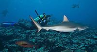 Manta Fest, Colonia, Yap, Micronesia. Mantas, grey reef sharks and macro stuff. Manta Ray Bay Hotel.
