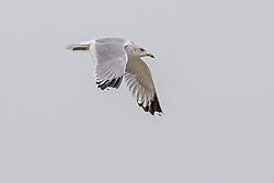 Seagulls<br /> Oostduinkerke Bad 2020<br /> © Hippo Foto - Dirk Caremans<br /> 29/11/2020