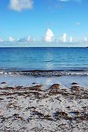 Shoreline and seaweed awash on Abaco Bay, Bahamas
