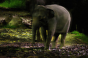 Night Safari Singapore. Elephant.