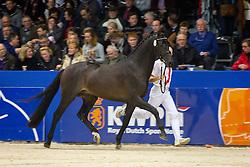 542 - Empire<br /> KWPN Hengstenkeuring - 's Hertogenbosch 2012<br /> © Dirk Caremans