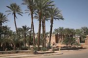 Date palm trees, Zagora, Morocco