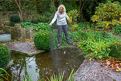 Putting nets over a pond to prevent leaves falling in.