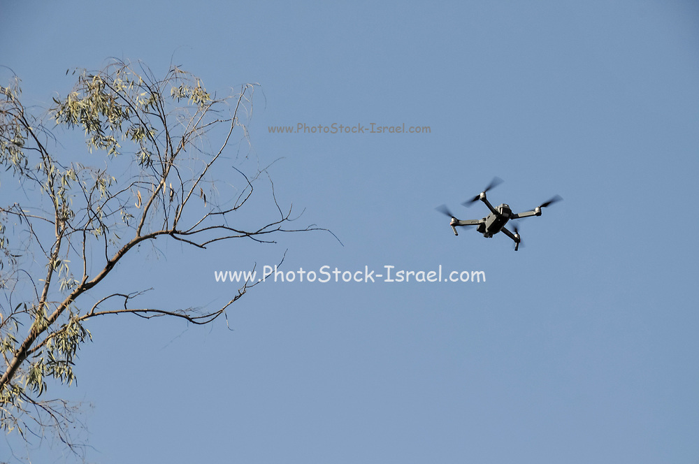 Remote control Quadrocopter, drone, with camera flying in a forest