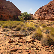 Red rock wall and desert landscape at Kings Canyon