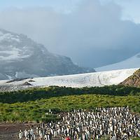 King Penguins stand below a glacier at Salisbury Plain, South Georgia, Antarctica.