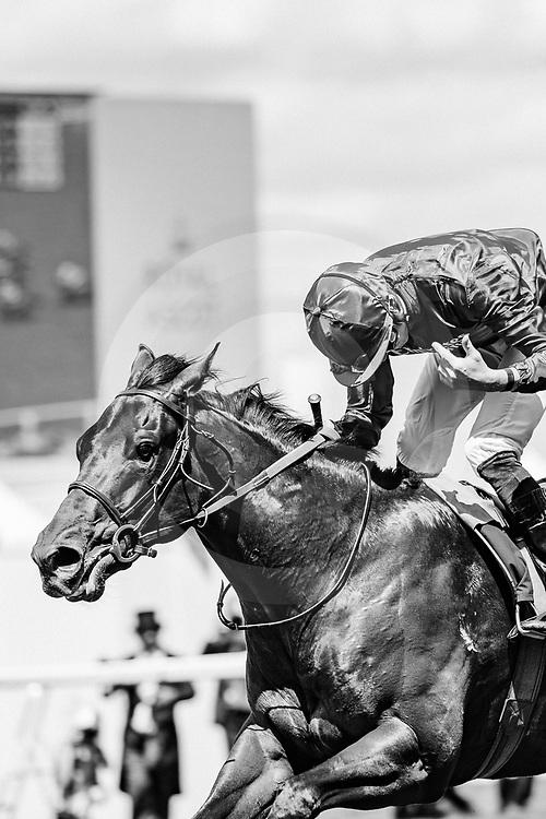 Pinatubo (J. Doyle) wins Chesham Stakes Listed at  Royal Ascot, 22/06/2019, photo: Zuzanna Lupa