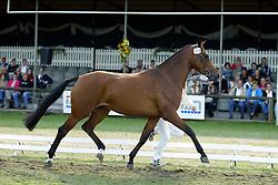 304-Urlanta<br /> KWPN Paardendagen Ermelo 2004<br /> Photo © Hippo Foto