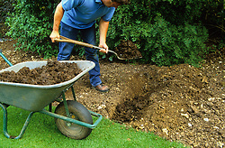 How to single dig<br /> Adding manure along bottom of trench