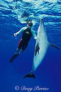 Spot, a wild, lone, sociable male bottlenose dolphin, Tursiops truncatus, with pal Jason Belport, Cayman Brac, Cayman Islands, British West Indies ( Caribbean Sea ) MR 281