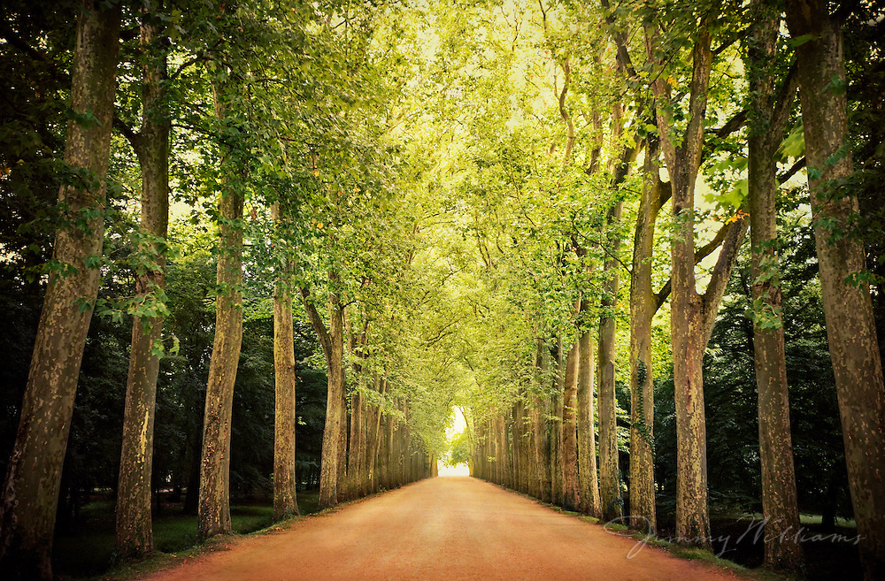 An old rural road lined with tall trees at Chateau Chenonceaux, France