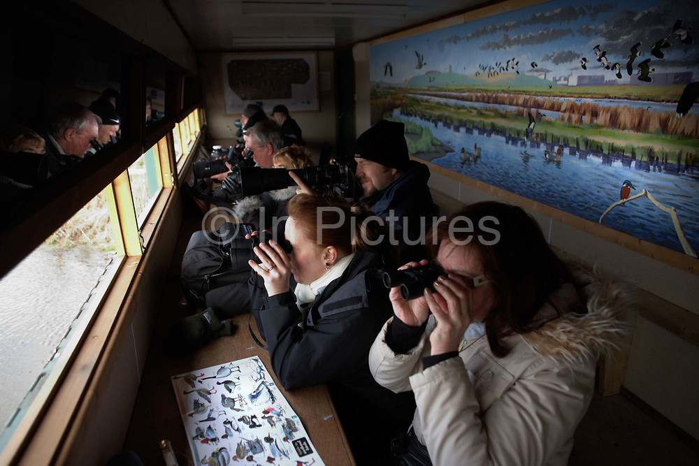 Hidden in a wooden hut, a group of bird-spotting ornithologists peer through binoculars at the Royal Society for the Protection of Birds (RSPB) rreserve at Rainham Marshes, Essex England. Watching dozens of wintering birds, the group are intensely looking through their optical equipment in anticipation of seeing rare breeds at this Site of Special Scientific Interest (SSSI), a wetland alongside the River Thames, 20 miles from Central London. A narrow slit is open to keep them hidden from sight so leaning on elbows and with a guide sheet in front to identify particular species, they concentrate on their hobby. The RSPB has 200 nature reserves covering almost 130,000 hectares, home to 80% of Britain's rarest or most threatened bird species. Its role is to speak out for birds and wildlife, tackling the problems that threaten the environment.