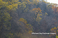 65045-01117 Trees in fall, Ozark National Scenic Riverway near Akers Ferry, MO