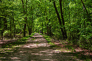 A photo looking down a path in the woods of Allaire State Park with sunlight streaming through the trees in the Spring.