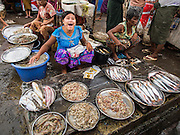 08 NOVEMBER 2014 - SITTWE, RAKHINE, MYANMAR:  A woman sells fresh fish in the market in Sittwe. Sittwe is a small town in the Myanmar state of Rakhine, on the Bay of Bengal.  PHOTO BY JACK KURTZ
