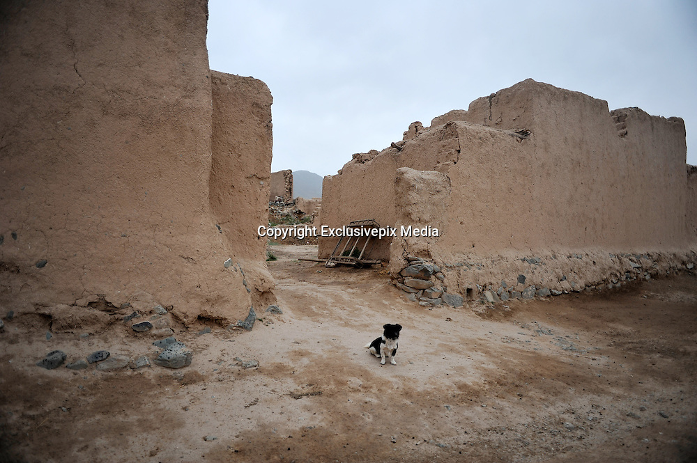 JINGTAI, CHINA - JUNE 20: (CHINA OUT) <br /> <br /> City inside 12 meter high walls<br /> <br /> A dog is seen at the Yongtai Acient City on June 19, 2015 in Jingtai County, Gansu Province of China. The Yongtai Ancient City, also known as the Turtle city, was built in 1608 during the Ming Dynasty (1368-1644). With a perimeter of 1,717 meters, the city wall is 12 meters in height. The city also has a six-meter wide and one-to-2.5-meter deep moat. In 2006, the city was listed as the sixth batch of nation key cultural relic preservation organ. There are more than 100 villagers still living in the city. <br /> ©Exclusivepix Media