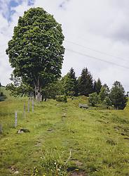 THEMENBILD - ein Wanderweg auf einer Wiese führt durch Bäumen hin durch, aufgenommen am 24. Mai 2020 in Kaprun, Oesterreich // a footpath on a meadow leads through trees in Kaprun, Austria on 2020/05/24. EXPA Pictures © 2020, PhotoCredit: EXPA/Stefanie Oberhauser