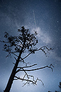 Night sky with Milky Way and a silhouette of Scots pine (Pinus sylvestris) and satellite gliding through, Kemeri National Park (Ķemeru Nacionālais parks), Latvia Ⓒ Davis Ulands | davisulands.com