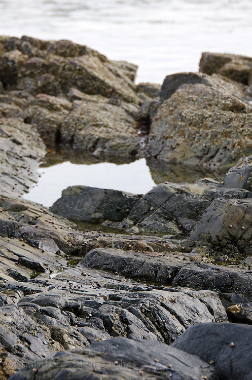 A tidepool among the rocks at Ogunquit, Maine.