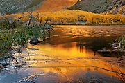 North Lake in the Eastern Sierra of California. Fall leaves reflecting in the lake just after sunrise.
