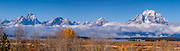 North America, USA, Wyoming, Grand Teton National Park, Willow Flats.  A Panorama of the Grand and Mt. Moran in Fall Colors