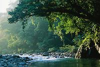 A river flows through the Northern Sierra Madre Natural Park rainforest.