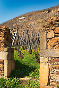 A gate in a stone wall and a sign saying 'de Boisseyt' Terraced vineyards in the Cote Rotie district around Ampuis in northern Rhone planted with the Syrah grape. Ampuis, Cote Rotie, Rhone, France, Europe