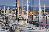Yachts in the Squalicum Marina at dusk with Mount Baker looming in the backgroun, Bellingham Bay Washington