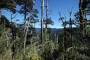 A view on the hike up to Circuito Quinchol from Lago Tinquilco in the Huerquehue National Park in Chile's lake district