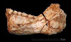 Jun 7, 2017 - Jebel Irhoud, Morocco - In a pair of papers published in Nature, an international team of researchers describe 22 human fossils from northwest Morocco that are approximately 300,000 years old. According to the authors, it is the earliest evidence of Homo sapiens ever discovered. The first of our kind. The mandible Irhoud 11 is the first, almost complete adult mandible discovered at the site of Jebel Irhoud. It is very robust and reminiscent of the smaller Tabun C2 mandible discovered in Israel in a much younger deposit. The bone morphology and the dentition display a mosaic of archaic and evolved features, clearly assigning it to the root of our own lineage. (Credit Image: © Jean-Jacques Hublin/MPI via ZUMA Wire)