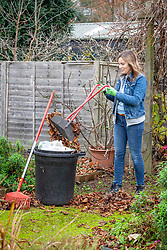 Picking up fallen leaves off paths with a leaf grabber and rake in order to make leaf mould.