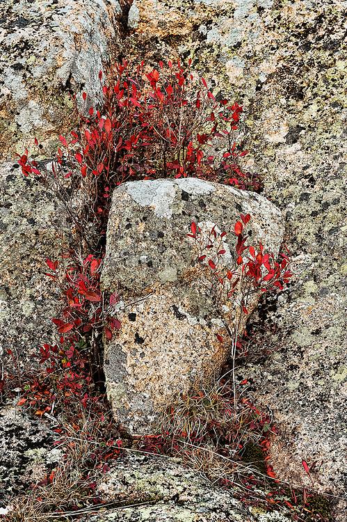 Lichen covered granite and groundcover foliage,