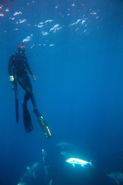 Kolt Johnson freedives within a school of amberjack swim in the waters off the coast of North Carolina. .