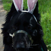 Easter Doggie