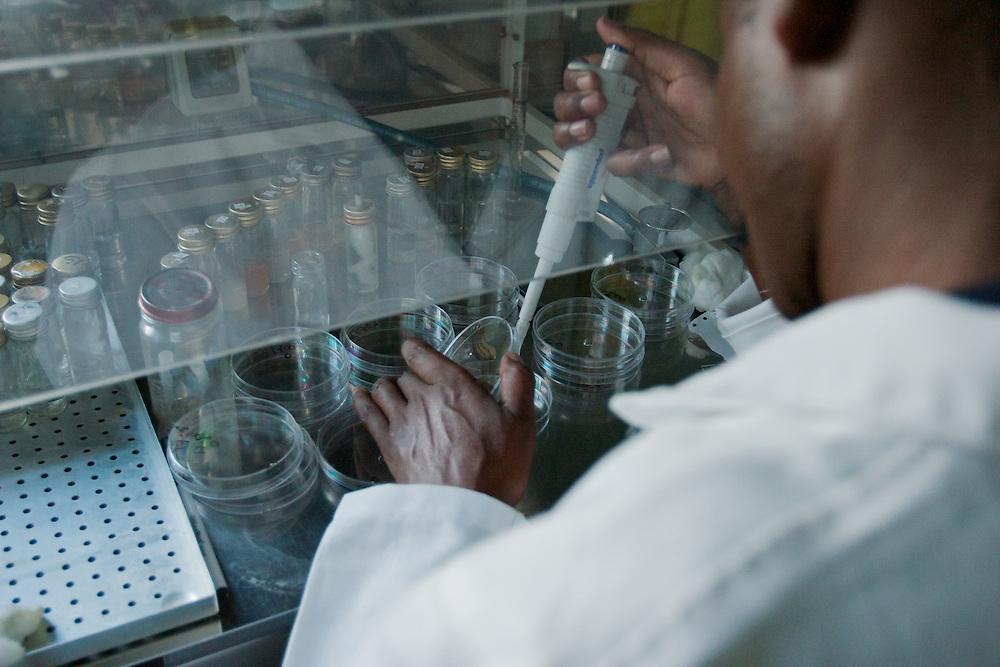 Kirue at work testing medicinal plant samples in the lab.