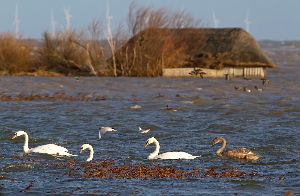 Floods of  6 12 2013 due to tidal surge showing submerged hides on flooded reserve,  Cley next the sea,  Norfolk UK
