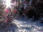 Bright sunshine on a winter day on the Estes Lake trail with many animal tracks in the snow