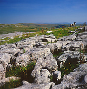 AJEM68 Limestone pavement Yorkshire Dales national park England