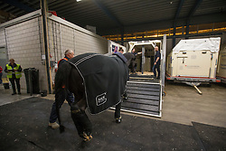Edward Gal's, (NED), Glock's Undercover getting into the flying stall<br /> Departure of the horses to the World Cup Finals in Las Vegas from Schiphol - Amsterdam 2015.<br />  © Hippo Foto - Dirk Caremans